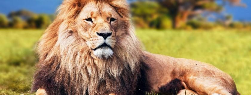"""Chuyện về Vua sư tử, mẹ con mèo và bầy chuột là một trong những câu truyện """"bất hủ"""" ở Việt Nam"""